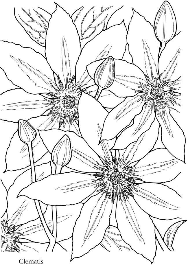 Click N Bloom coloring #9, Download drawings