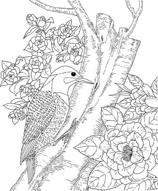 Click N Bloom coloring #16, Download drawings