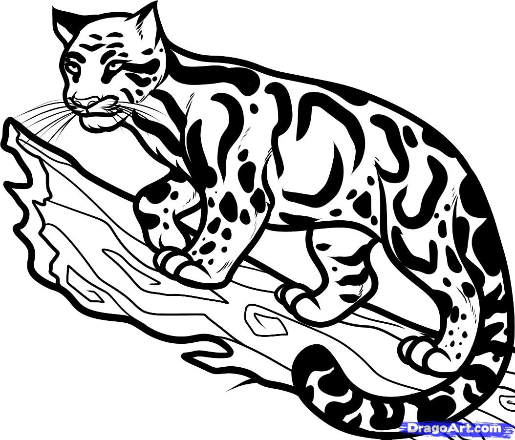 Clouded Leopard  coloring #4, Download drawings