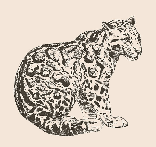 Clouded Leopard  clipart #15, Download drawings