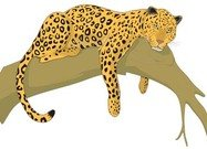 Clouded Leopard  clipart #11, Download drawings