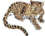 Clouded Leopard  clipart #20, Download drawings