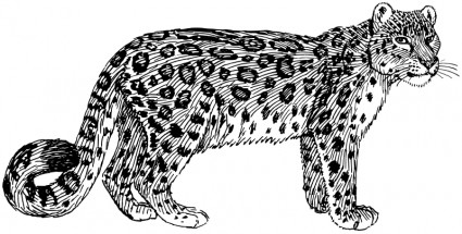 Clouded Leopard  clipart #8, Download drawings