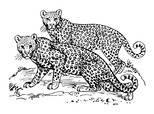 Clouded Leopard  clipart #19, Download drawings