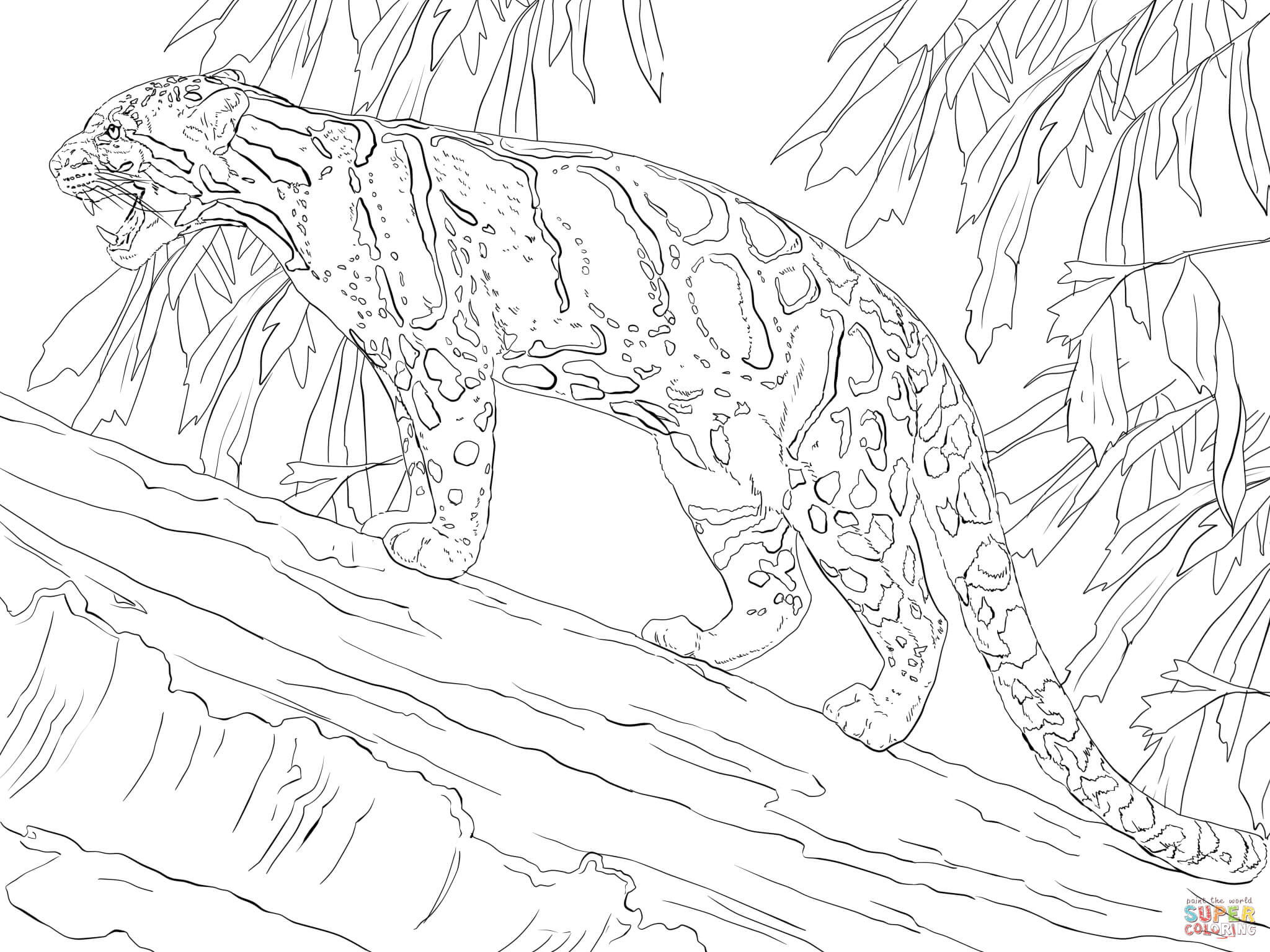 Clouded Leopard  coloring #3, Download drawings