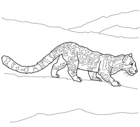 Clouded Leopard  coloring #7, Download drawings
