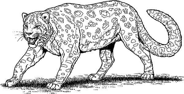 Leopard coloring #17, Download drawings