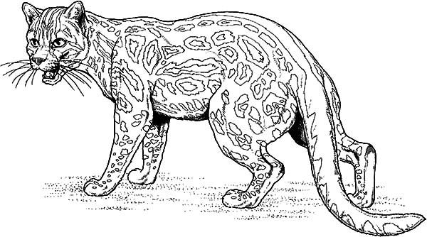 coloring pages jaguars - photo#30