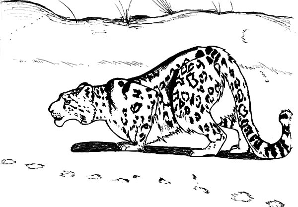 Clouded Leopard  coloring #13, Download drawings