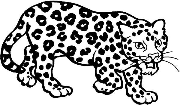 Clouded Leopard  coloring #5, Download drawings