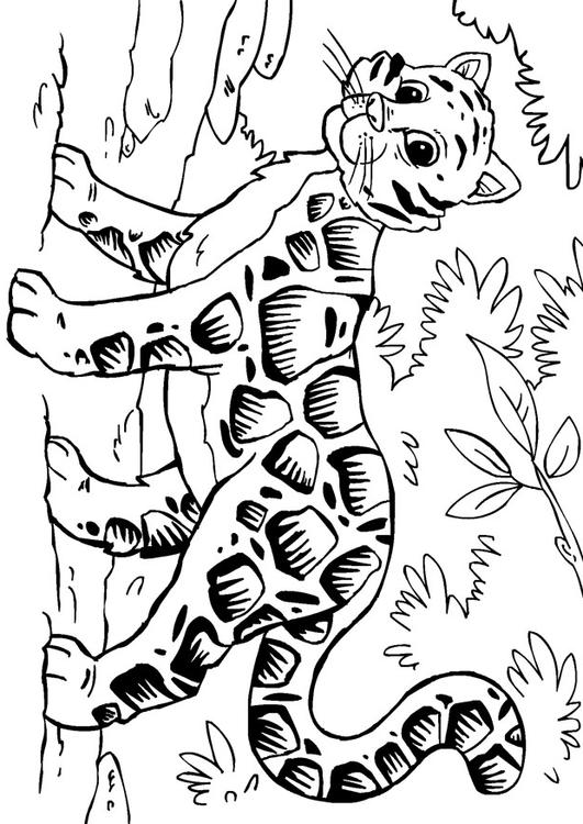 Clouded Leopard  coloring #9, Download drawings
