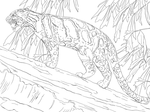 Clouded Leopard  coloring #10, Download drawings