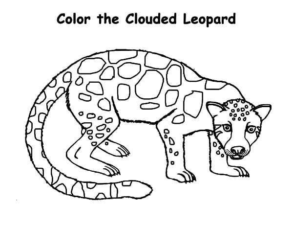 Clouded Leopard  coloring #1, Download drawings