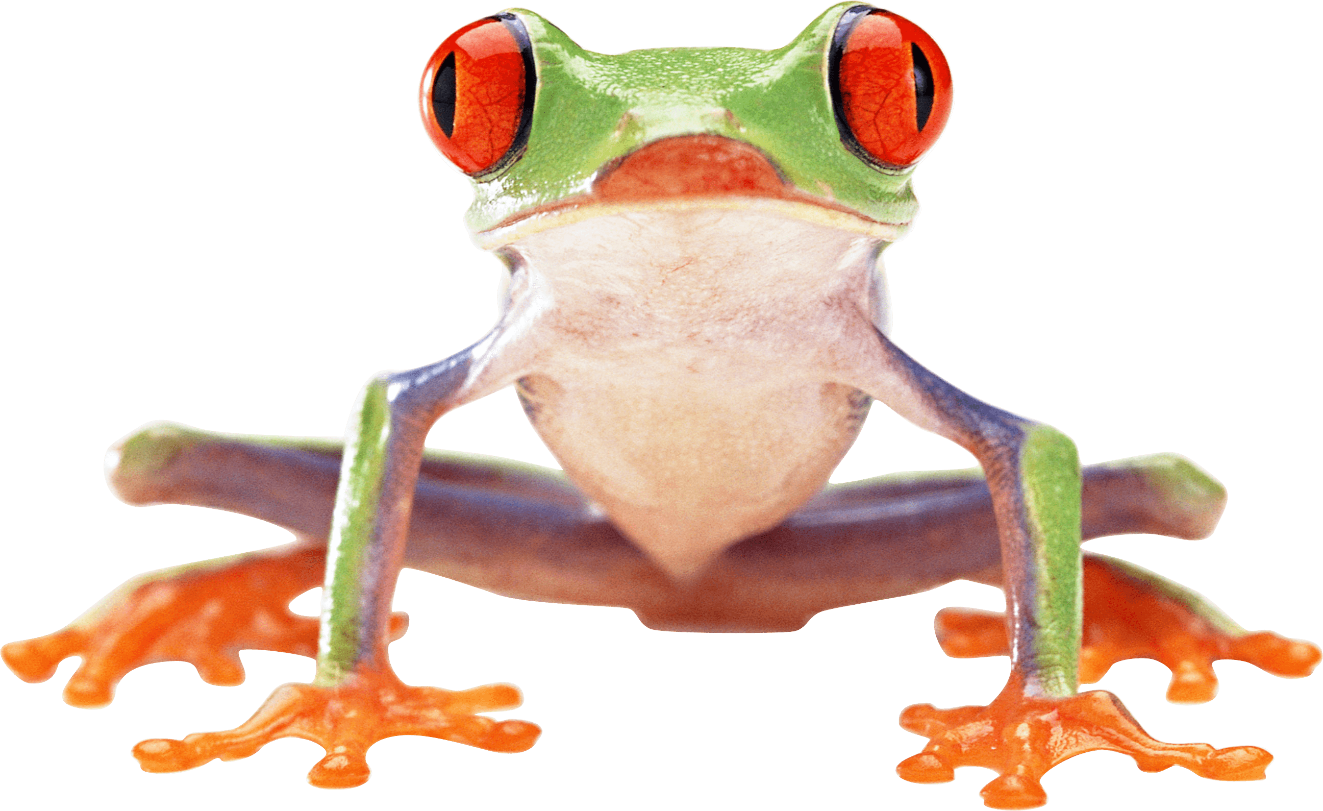 Clown Frog clipart #2, Download drawings