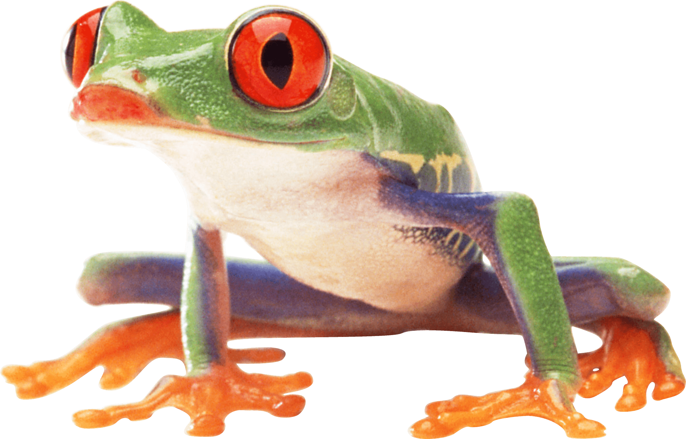Clown Frog clipart #3, Download drawings