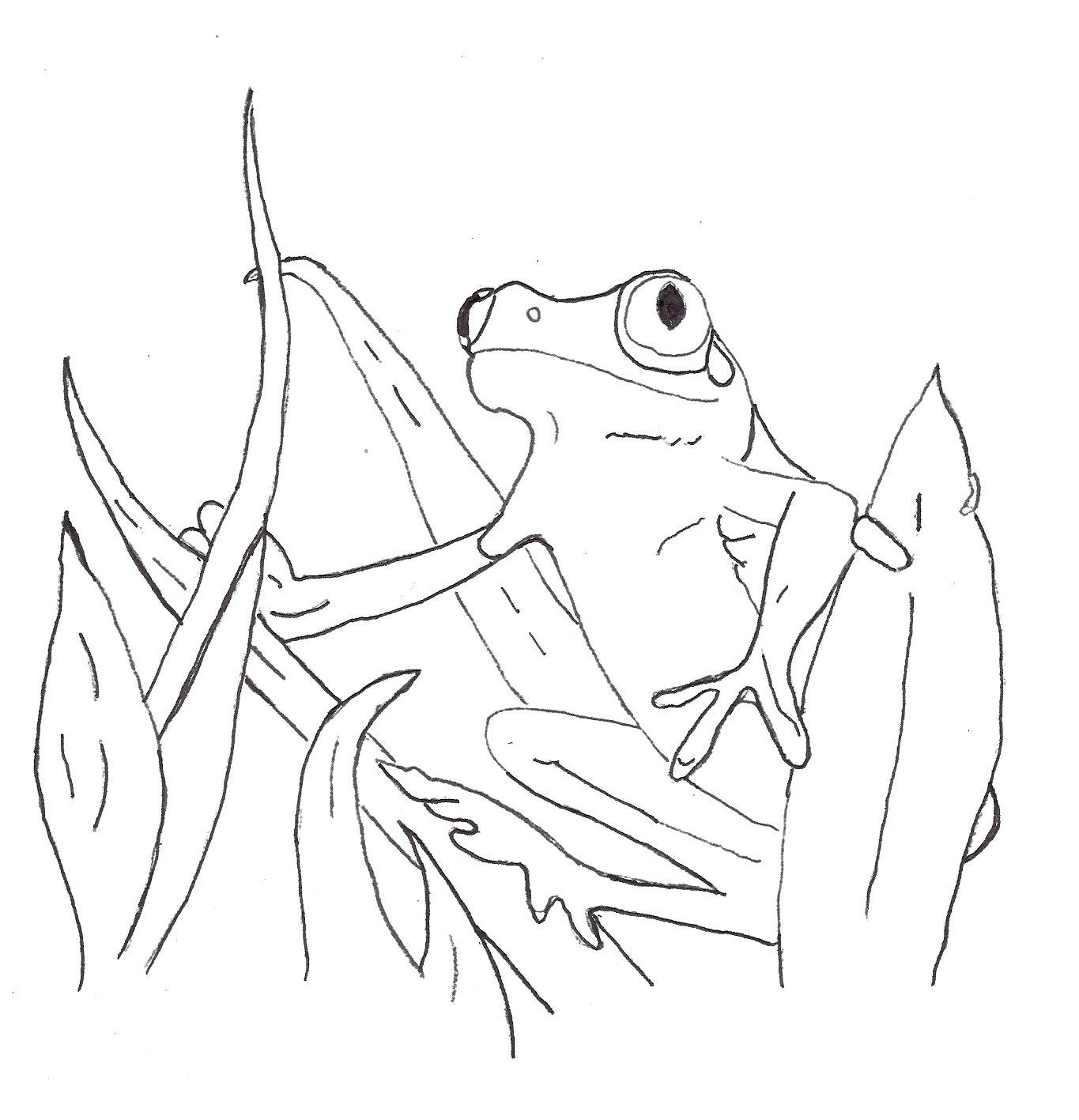 Clown Frog coloring #17, Download drawings