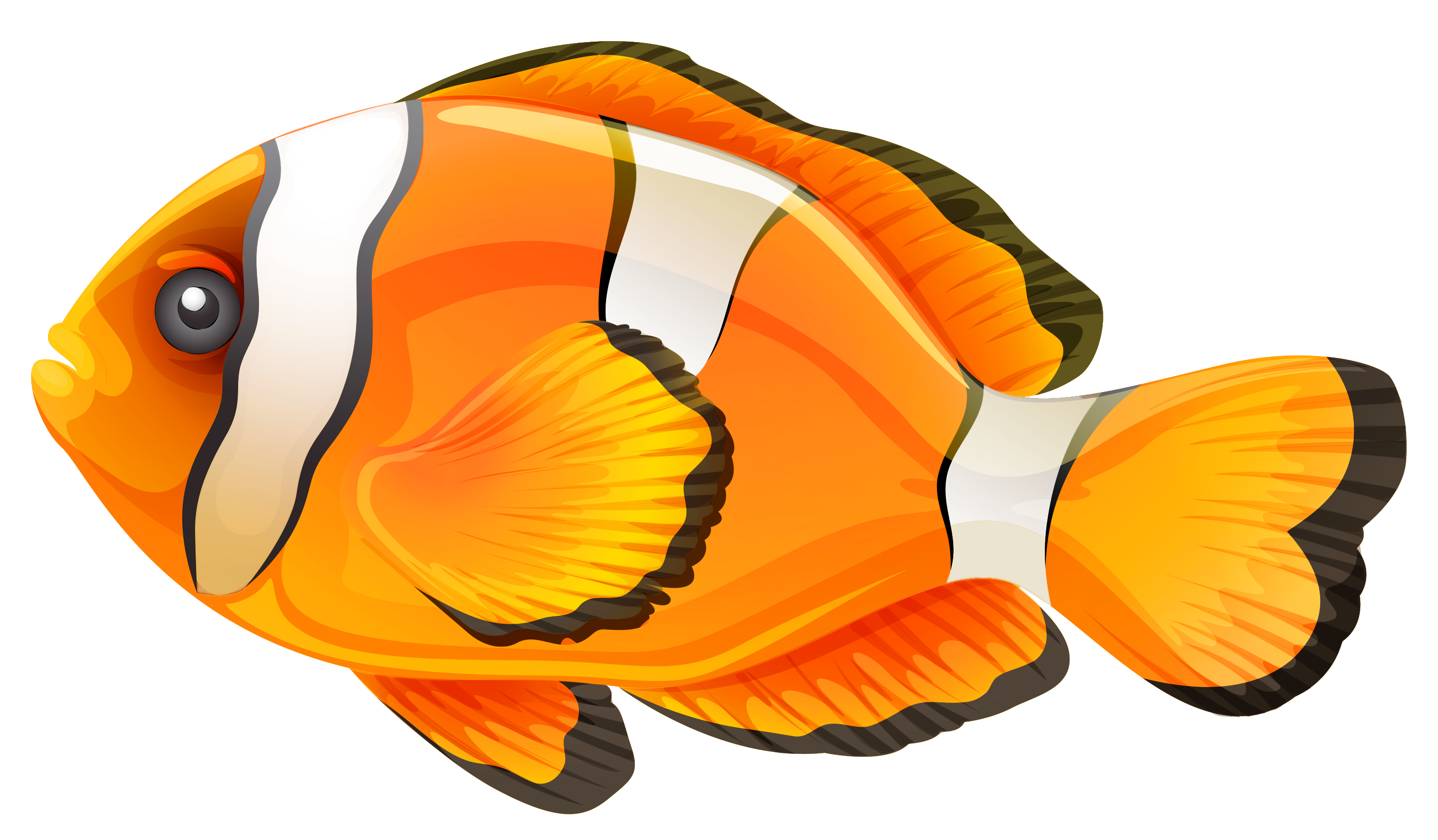 Clownfish clipart #1, Download drawings