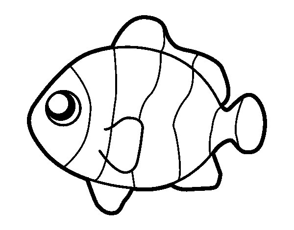 Clownfish coloring #3, Download drawings