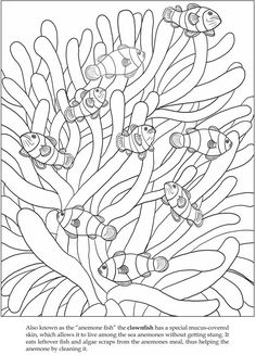 Clownfish coloring #9, Download drawings