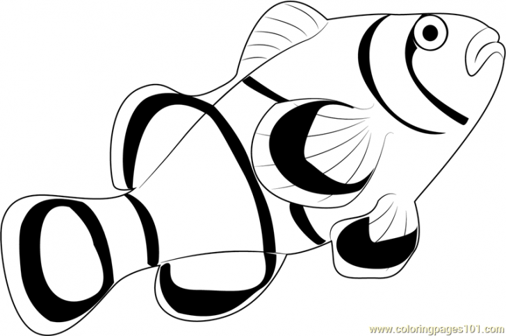 Clownfish coloring #13, Download drawings