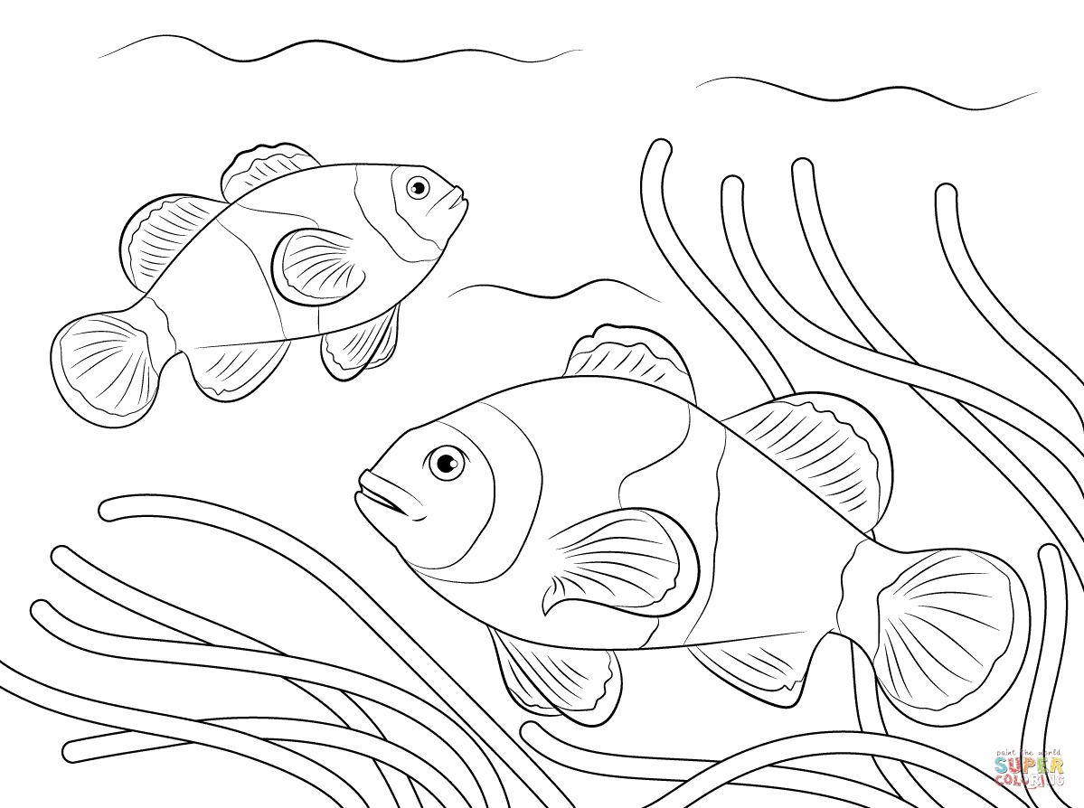 Clownfish coloring #11, Download drawings