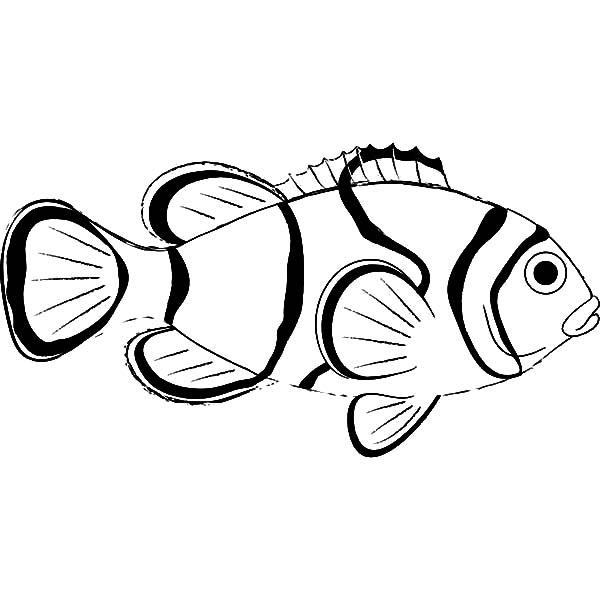 Clownfish coloring #20, Download drawings