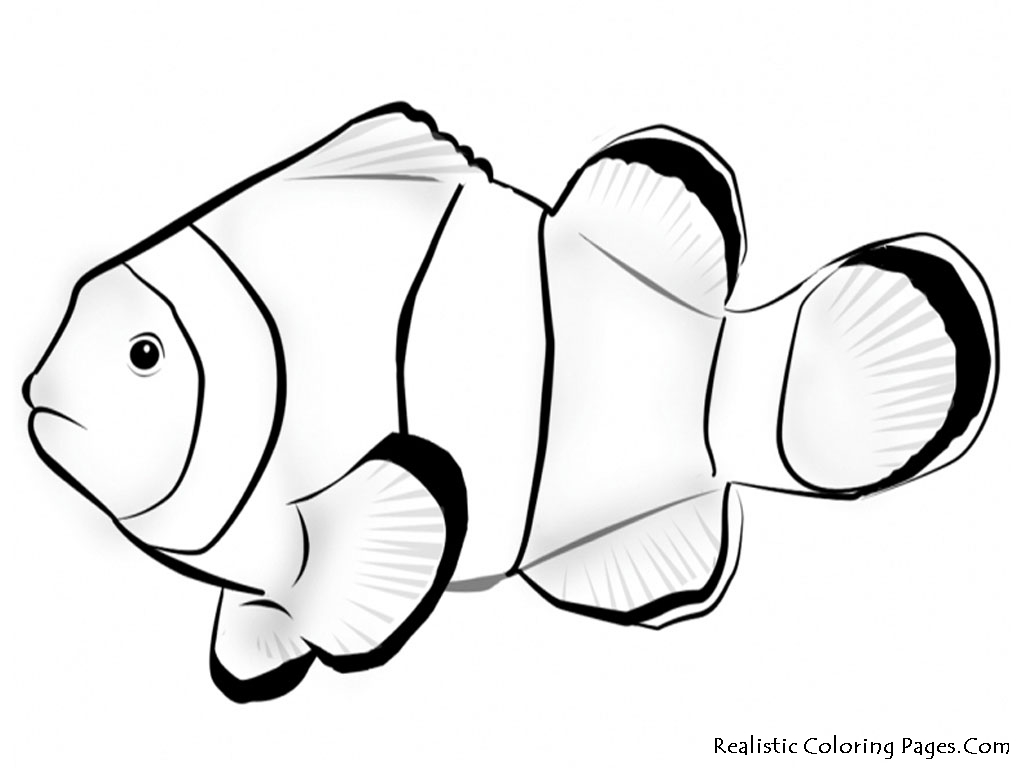 Clownfish coloring #5, Download drawings