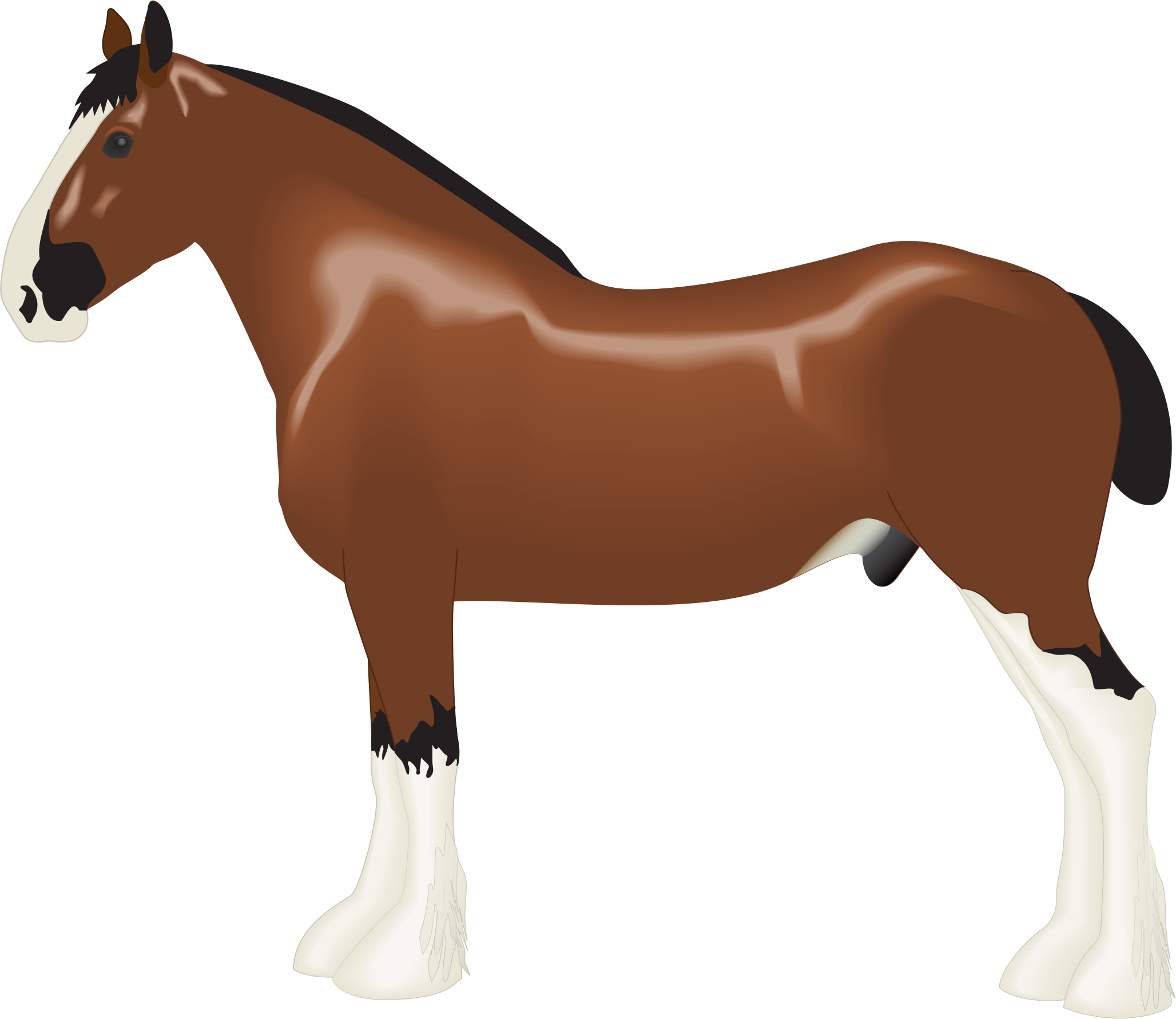 Clydesdale clipart #3, Download drawings