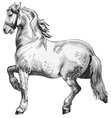 Clydesdale clipart #8, Download drawings