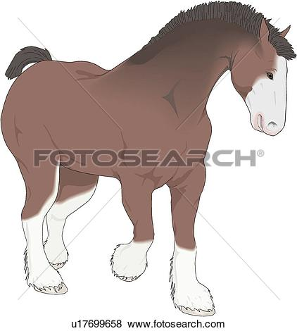 Clydesdale clipart #16, Download drawings