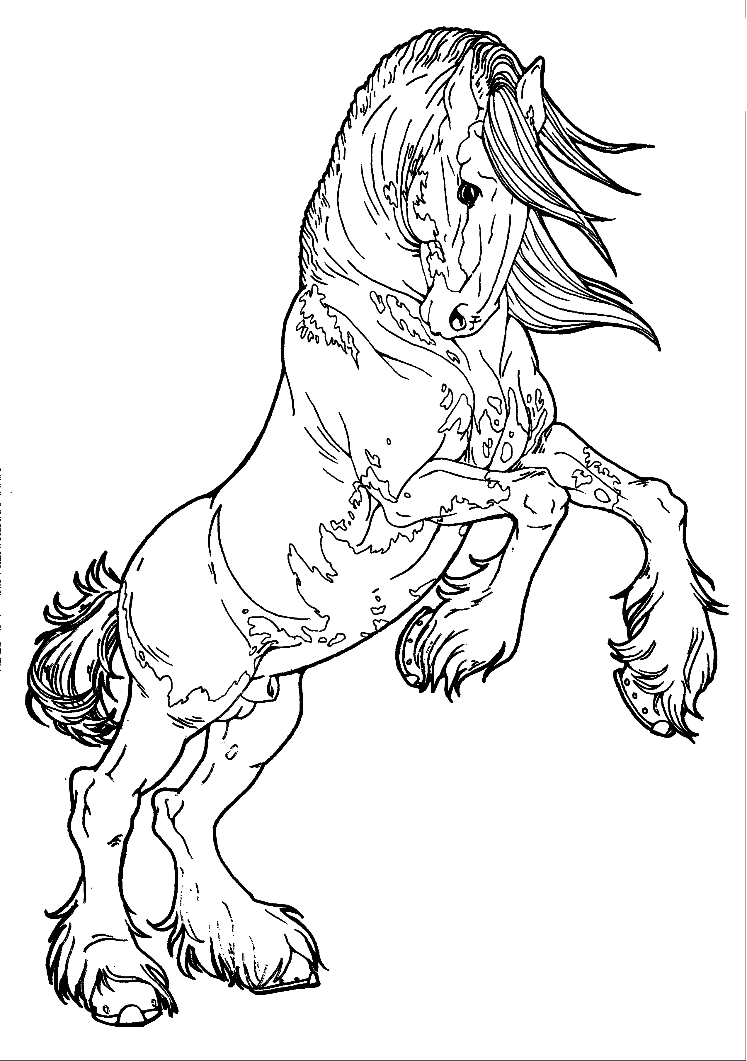 Clydesdale coloring #2, Download drawings