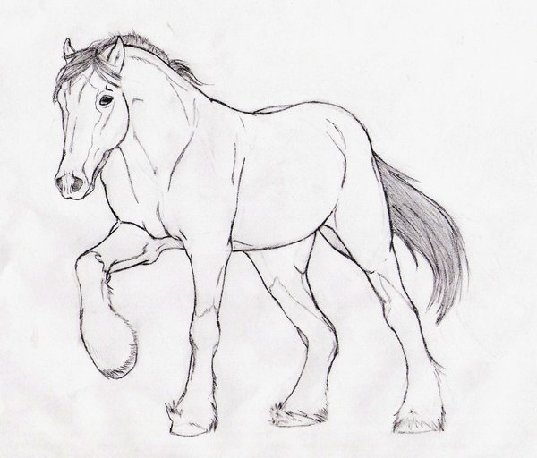 Clydesdale coloring #18, Download drawings