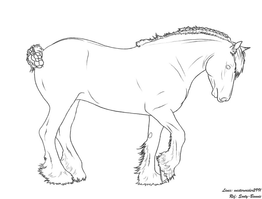 Clydesdale coloring #15, Download drawings