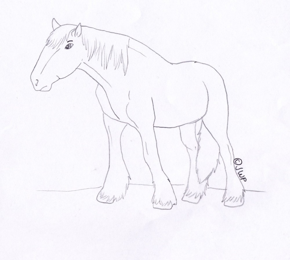 Clydesdale coloring #1, Download drawings