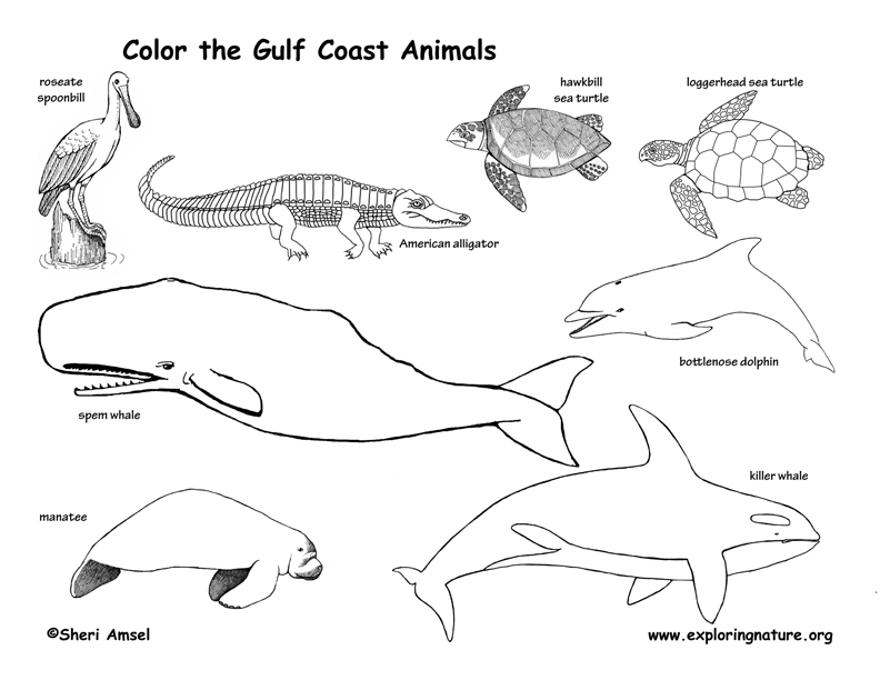 Coast coloring #1, Download drawings