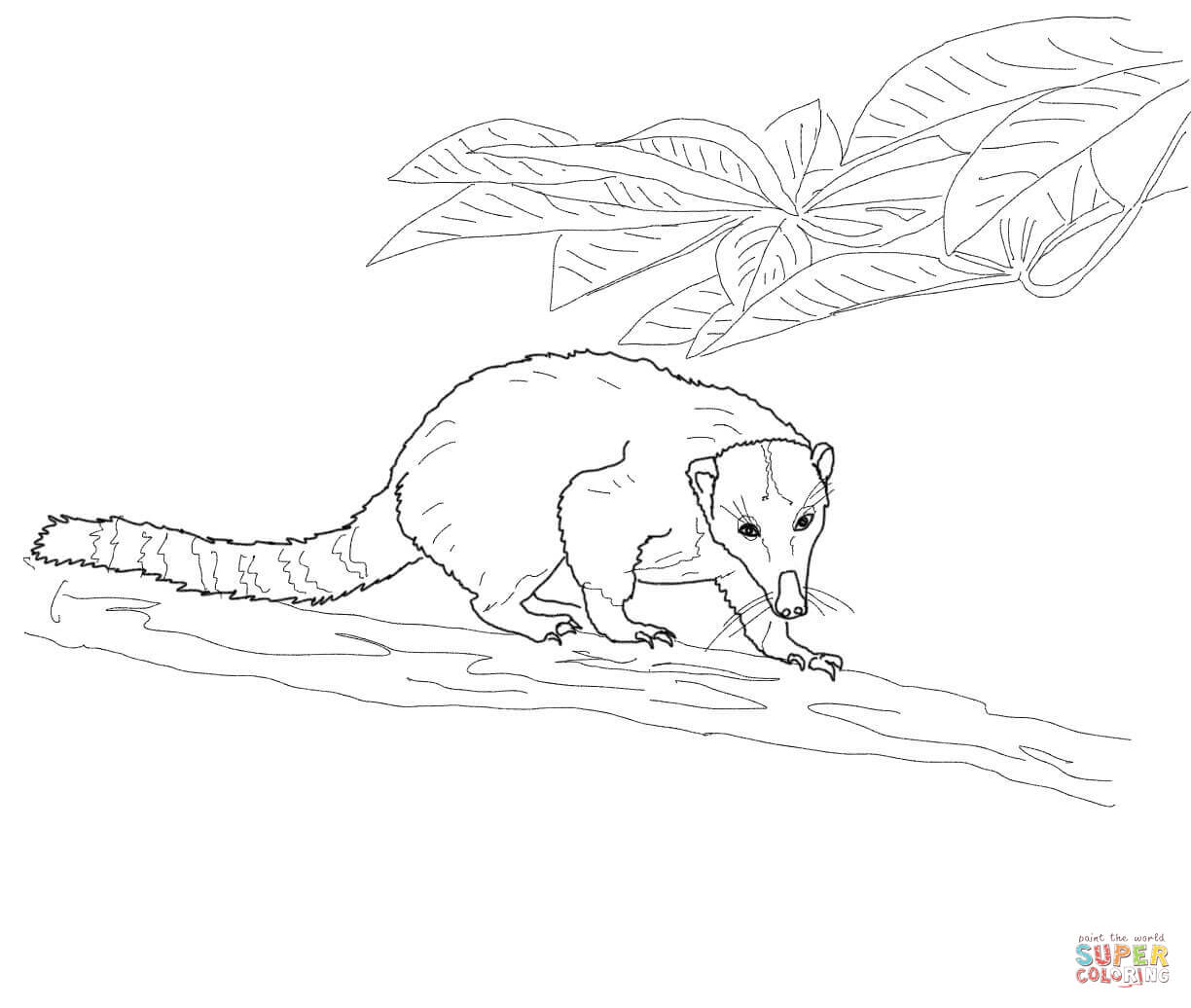 Coati coloring #14, Download drawings