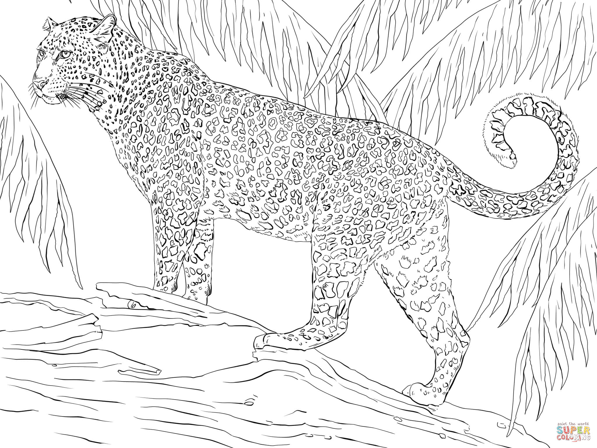 Coati coloring #5, Download drawings