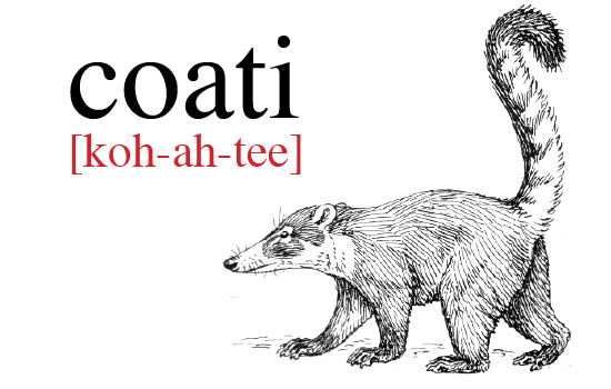 Coati coloring #9, Download drawings