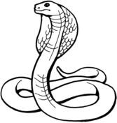 Cobra coloring #19, Download drawings