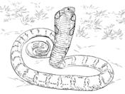 Cobra coloring #7, Download drawings