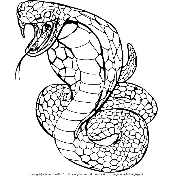 king cobra coloring download king cobra coloring