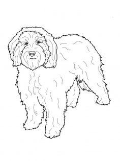 Cockapoo coloring #18, Download drawings