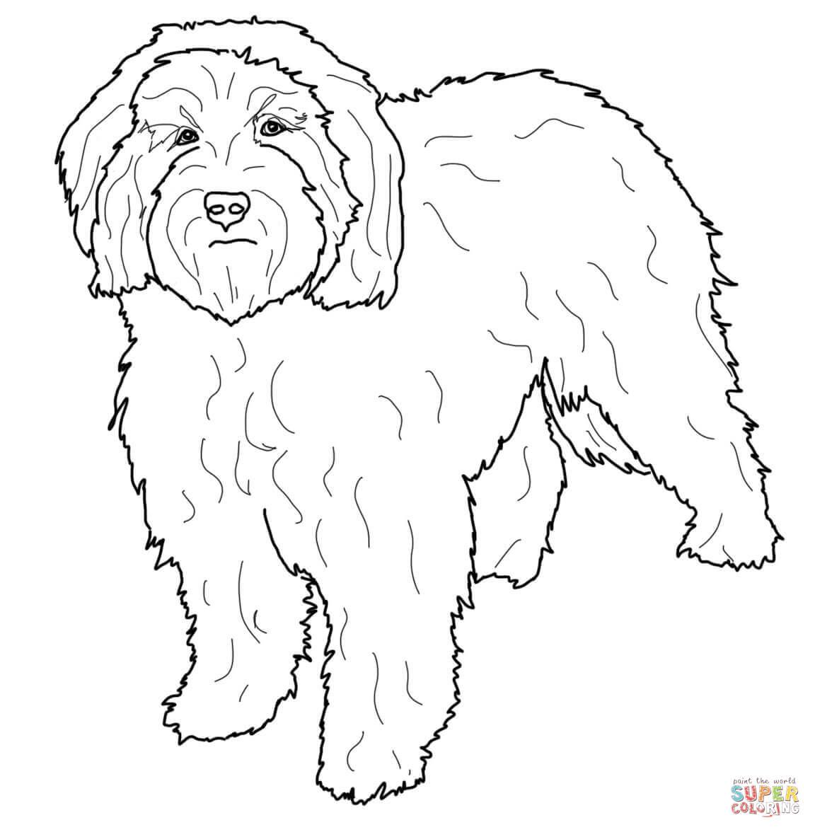 Cockapoo coloring #12, Download drawings
