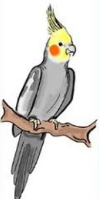 Cockatiel clipart #20, Download drawings