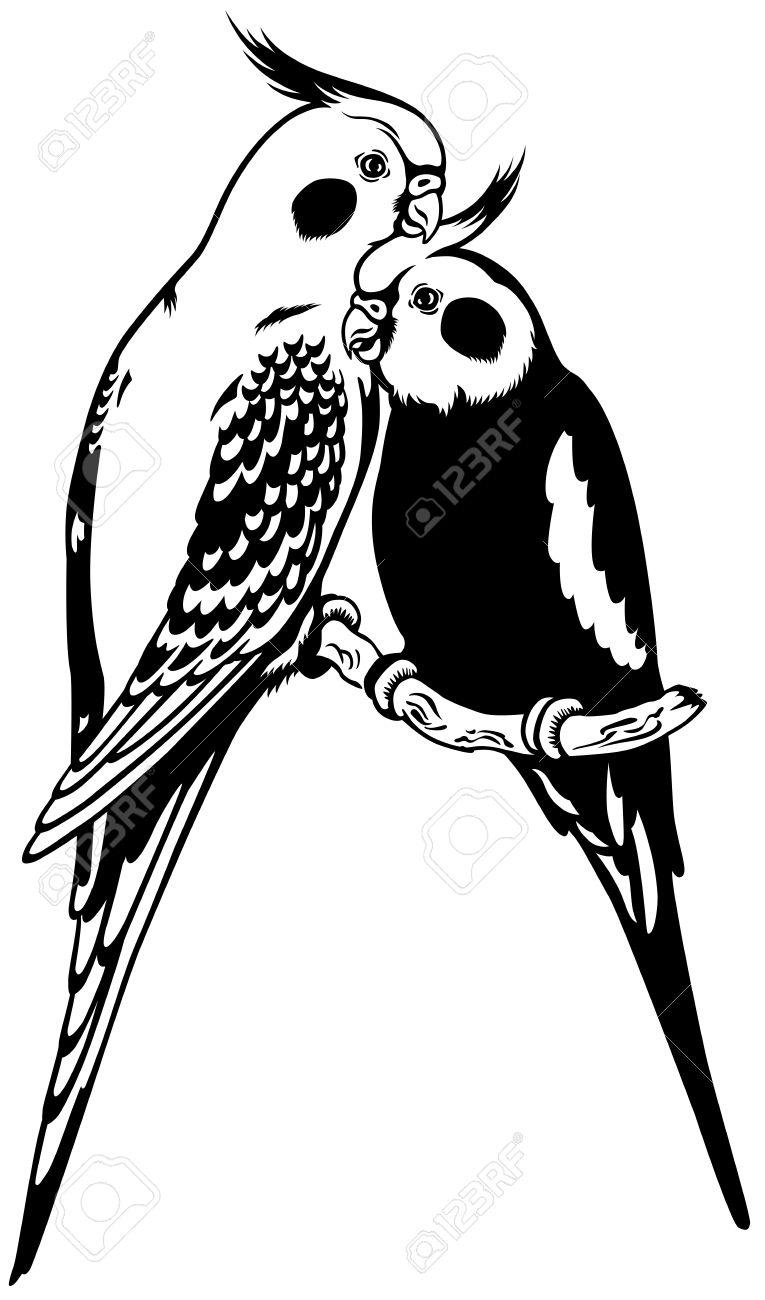 Cockatiel clipart #4, Download drawings