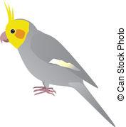 Cockatiel clipart #17, Download drawings