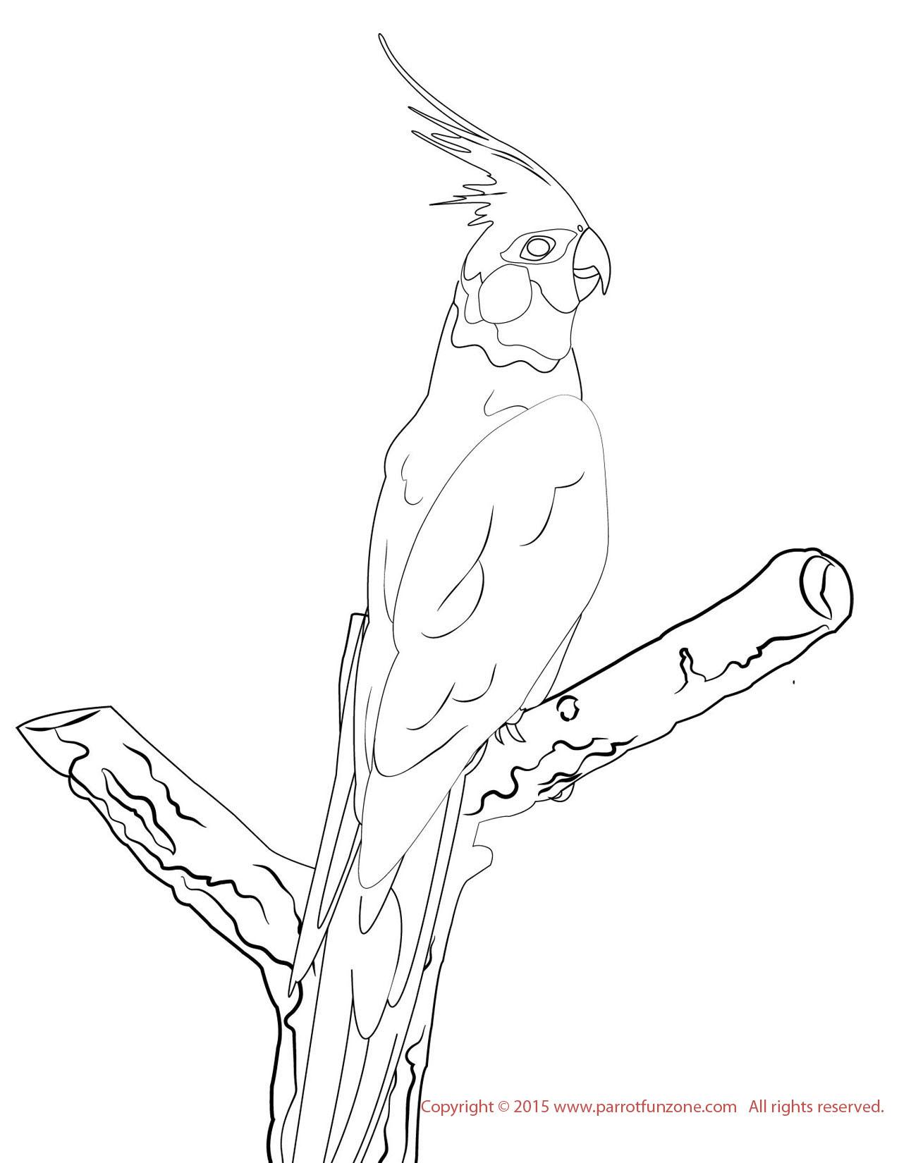 Cockatiel coloring #20, Download drawings
