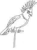 Cockatiel coloring #9, Download drawings