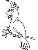 Cockatiel coloring #7, Download drawings