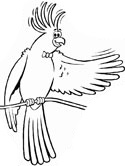 Cockatiel coloring #8, Download drawings